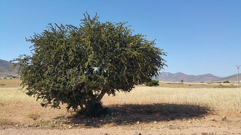 argan oil for skin