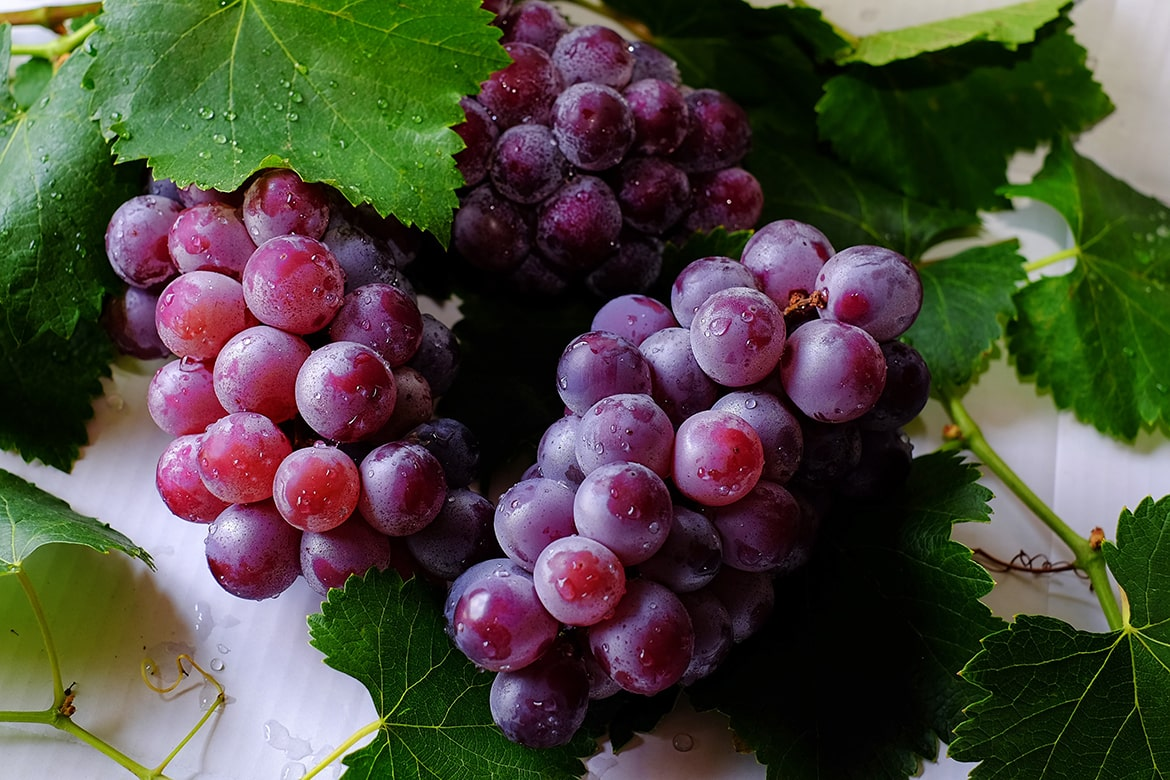 grape seed extract in skincare