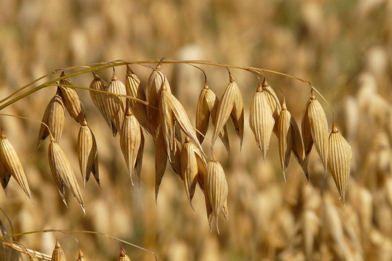 colloidal oatmeal in skincare